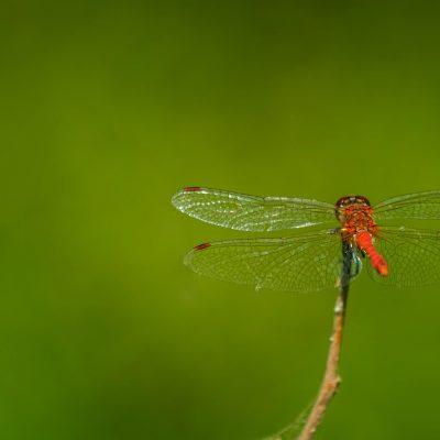 "Dragonfly atthe ""Srebarna"" NatureReserve"