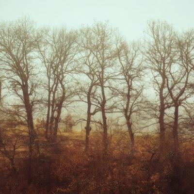 Surreal autumn