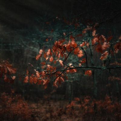 The door of autumn